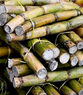 Barloworld Logistics Illovo Sugar